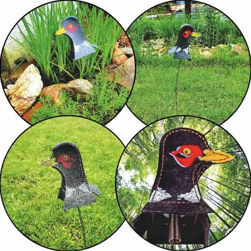 Fasan Target im Garten Beispielbilder